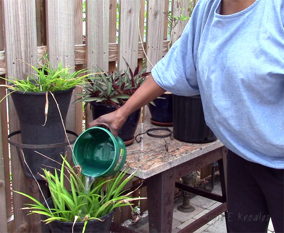 watering plants with recycled water